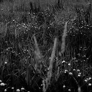 Wetland Prairie Landscape 011 by Noah Weiner