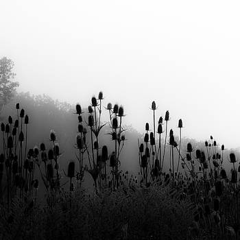 Wetland Prairie Landscape 012 by Noah Weiner