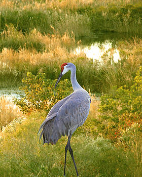Wetland Splendor by Adele Moscaritolo