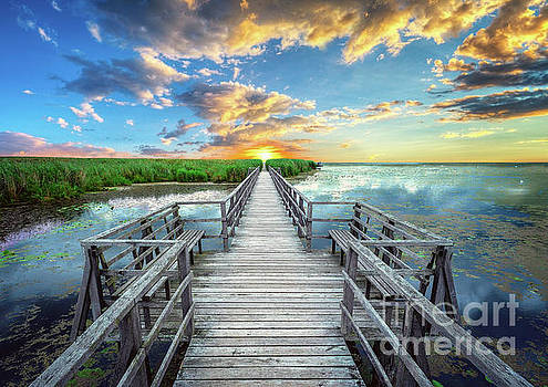 Wetland Marsh Sunrise Treasure Coast Florida Boardwalk A1 by Ricardos Creations