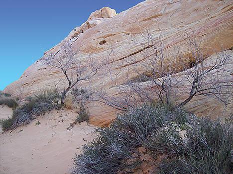 Whale Rock by Steve Ellis