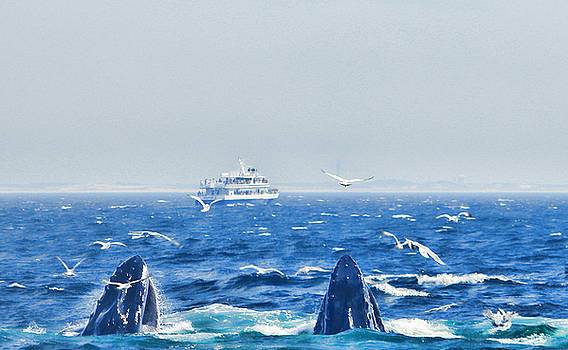 Whale Watching by Cathy Leite Photography