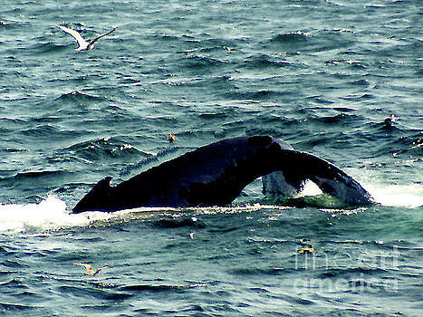 Whale Watching - Gloucester MA by Merton Allen