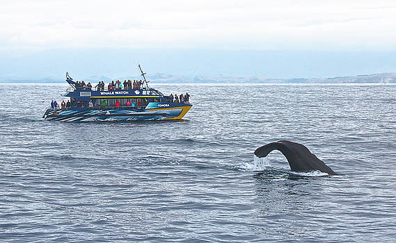 Venetia Featherstone-Witty - Whale Watching in Kaikoura, New Zealand
