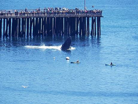 Whales by the Pier by Jan Moore