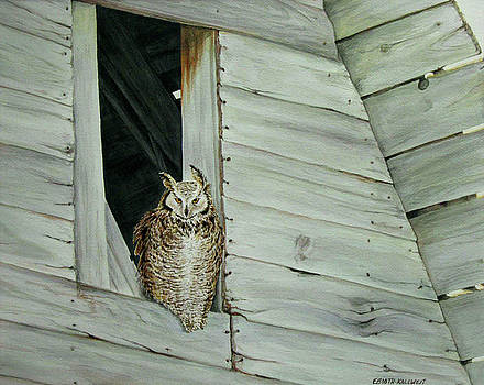 Great Horned Owl by Elaine Booth-Kallweit