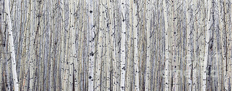 Alanna DPhoto - Contemporary Zen Forest