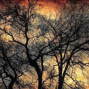 Nature's Drama by Christi Vest