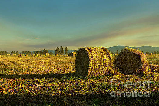 What the Hay by Danny Nestor