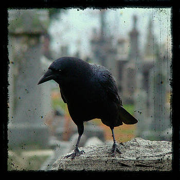 What's Does Crow Hear by Gothicrow Images