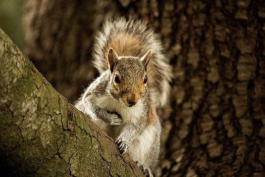 What's Up? by Bob Cournoyer