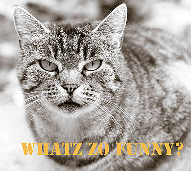 Whatz Zo Funny by Frank Tschakert