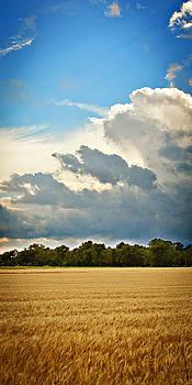 Wheat 5 by Laura Wiksten