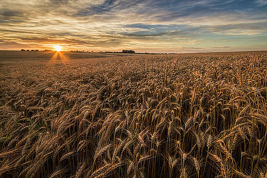 Wheat at Sunset by Scott Bean