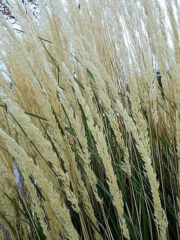 Wheat by Diamond Jade