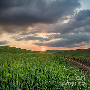 Wheat Field At Sunset by Michael Lesiv