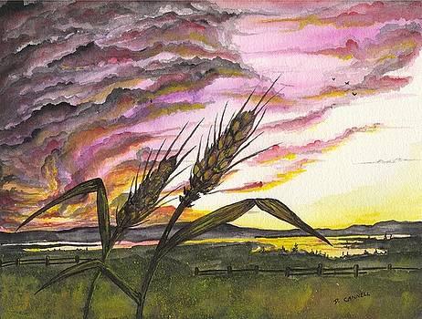 Wheat field by Darren Cannell