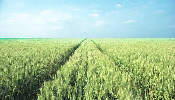 Daniel Furon - Wheat Field Forever