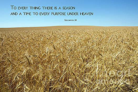 Wheat Field Harvest Season by Steven Frame
