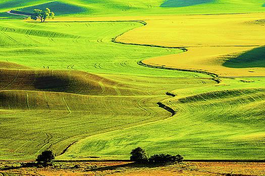 Wheat field - Palouse by Hisao Mogi