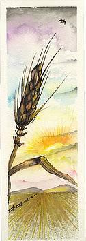 Wheat field study three by Darren Cannell