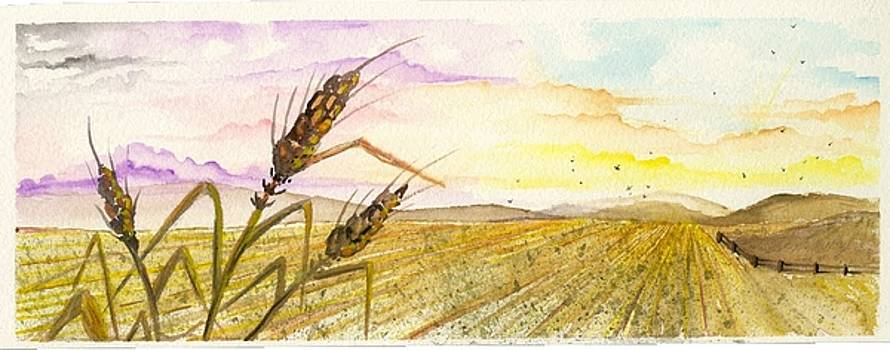 Wheat field study two by Darren Cannell
