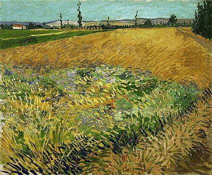 Wheat Field with Alpilles Foothills in the Background at Wheat Fields Van Gogh series, by Vincent  by Artistic Panda