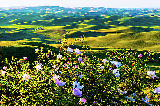 Wheat field with wild rose by Hisao Mogi