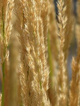 Wheat Stalks by Diane Greco-Lesser