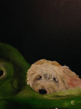 Wheaten terrier on bed by Amy Fissell