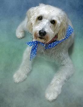 Wheaton Terrier Maddie by Stephanie Calhoun