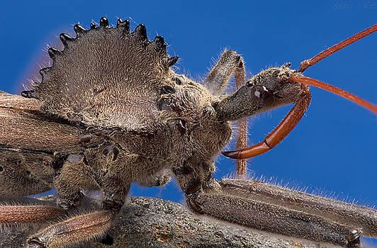 Wheel Bug by Warren Sarle