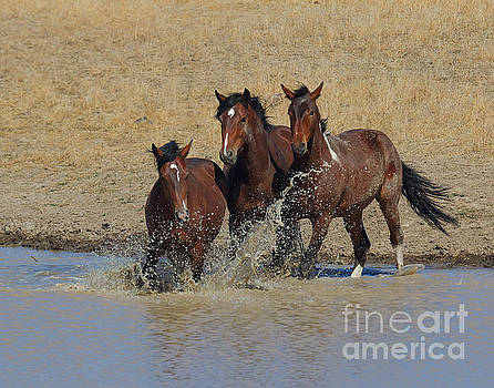 When a Horse Sees a Waterhole by Rod Giffels
