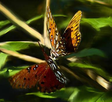 When Butterflies Kiss by Jeff Breiman