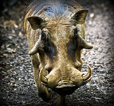 When I was a Young Warthog by Nora Blansett