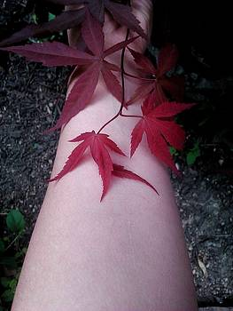 When life gives you Japanese Maple Leaves... by Brynn Ditsche
