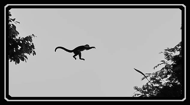 When monkeys fly by BYETPhotography