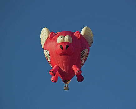 When Pigs Fly by Tom Winfield