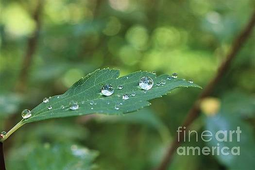 When Raindrops Linger by Dee Winslow