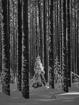 When the light falls bw by Jouko Lehto