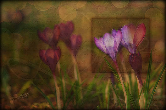 When the Light Paints the Flowers by Joy Gerow