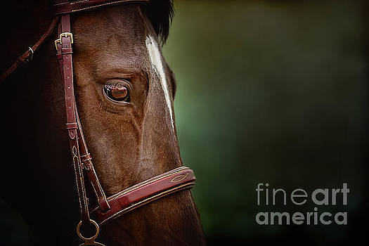 When you look into his eye, what do you see? by Debby Herold
