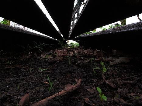 Where Dead Benches Lie by Will Van Niekerk