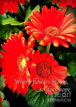 Nancy Stein - Where Flowers Bloom