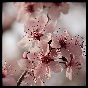 🌸where Flowers Bloom.. so Does by Jen Peterman
