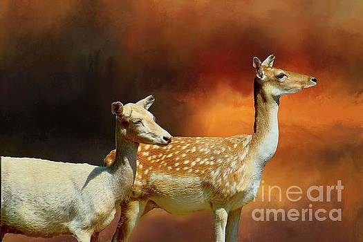 Two Deer at Sunset by Janette Boyd