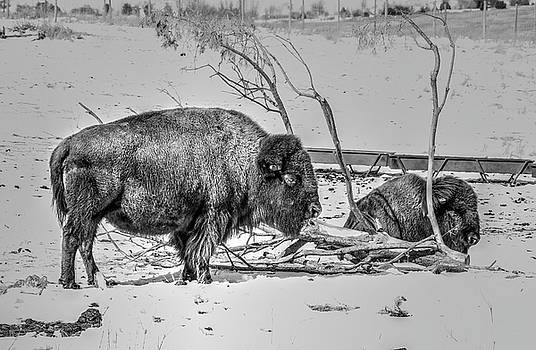Where The Buffalo Rest by J Laughlin