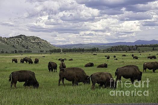 Tim Moore - Where the Buffalo Roam