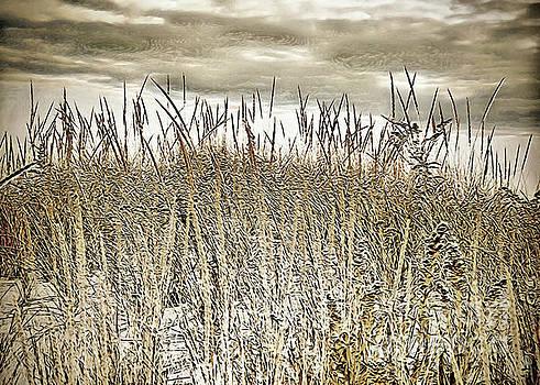 Where the Dunes Meet the Sky by Margaret Koc