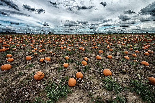 Where the Pumpkin Babies are Born by Tony Coleby